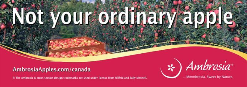 Ambrosia Apples in Canada