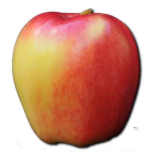 Ambrosia apples - healthy