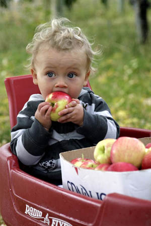 Ambrosia apples and babies