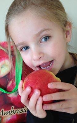 Ambrosia apples healthy