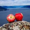 hike with Ambrosia apples