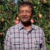 Ambrosia apple grower