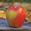 Ambrosia apples are delicioius