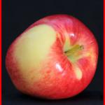 Ambrosia apples Canada