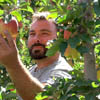 Ambrosia apples grower