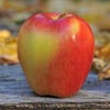 Ambrosia apples for health
