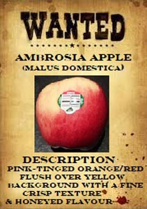 delicious Ambrosia apples