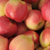 delicious Ambrosia apples