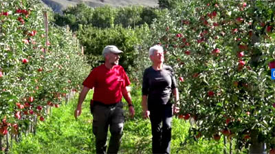 Ambrosia apple video