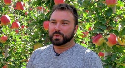 Ambrosia apples grower