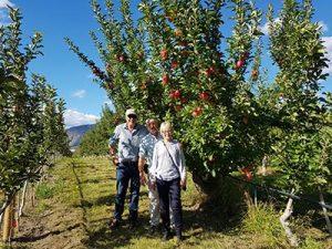 Ambrosia apples growers